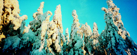 Landscape around Koli