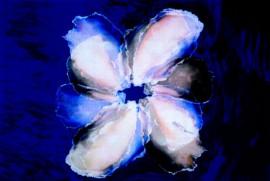 Flower (oyster shells)