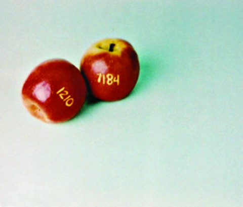 Amicable Apples (1 of 4)
