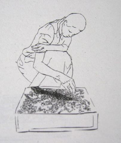 One of three drawings of a woman planting seeds