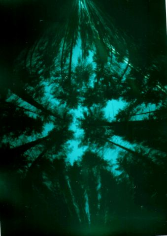 pinhole image in woods