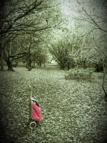 The red shopping trolley in the woods