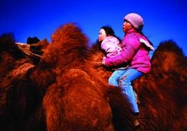 Bulgan Camel Festival