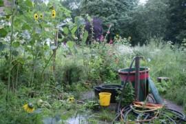 Community garden, Berlin