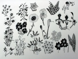 Rememberance of plants past (3)
