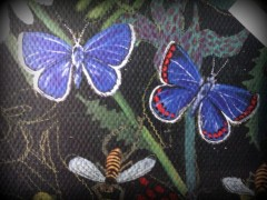 2 blue butterflies