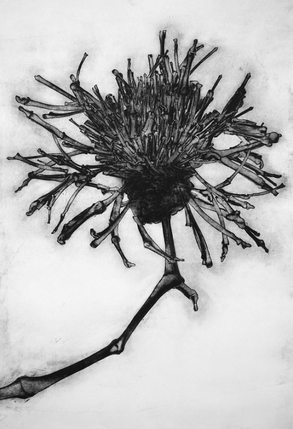 Carol Wyss, Greater Knapweed.