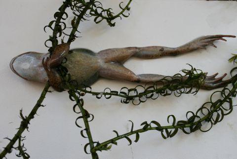 Frog clutching pondweed