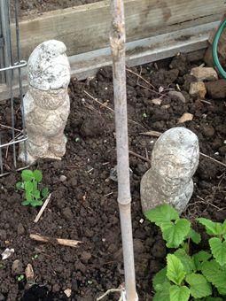 24-yr old Garden gnomes
