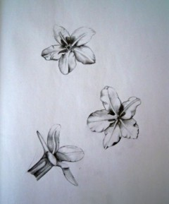 Study of Gromwell