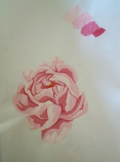 Preliminary painting of  peony for Pearl