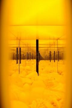 Yellow Chamber #3