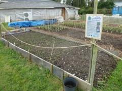 The healthy seedlings.