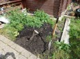 Sharon's veg patch before