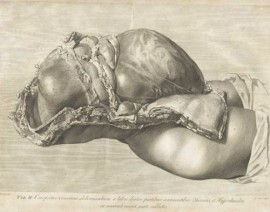 Gravid Uterus William Hunter (1774)