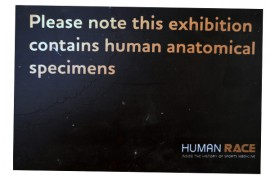 anatomical specimens