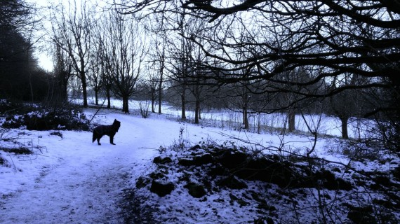 dog on park path with snow on ground