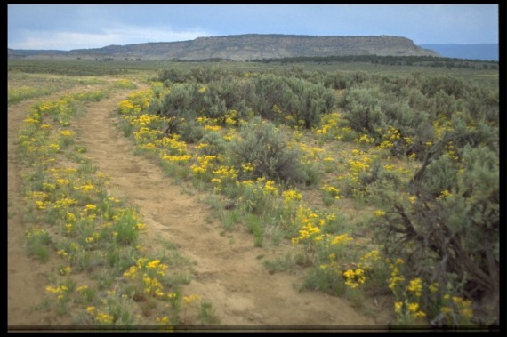 photo of the road across the mesa in Portales, New Mexico where Agnes Martin lived