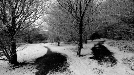 two black paths in snow