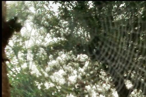 photo of s Spider's web, Shaftesbury Estate, Dorset 2013