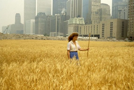 Wheatfield grown in the shadow of New York City