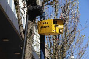 Lonely Signpost, I Am A Birdbox, Swansea High Street. Courtesy: Erin Rickard