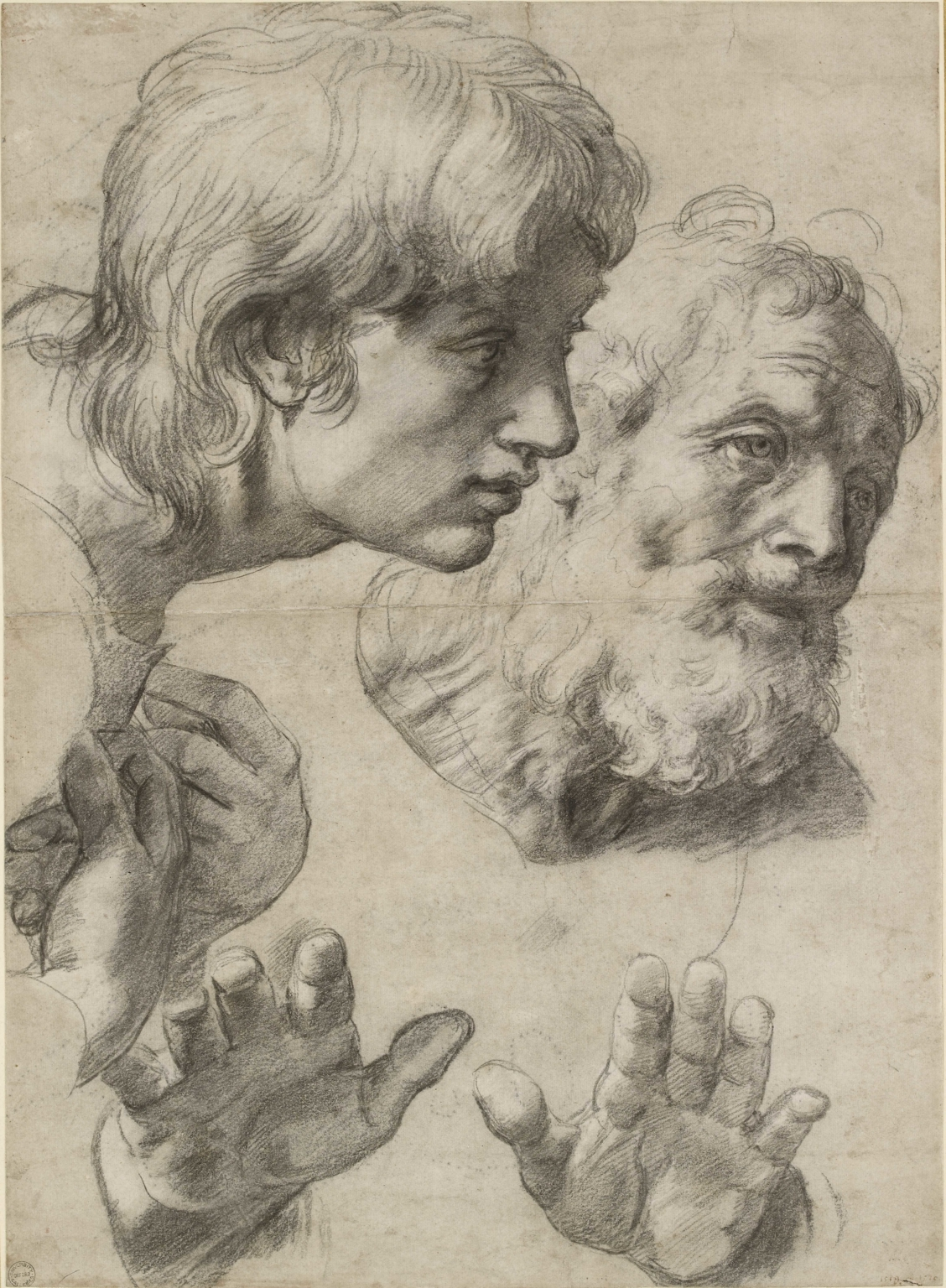 Raphael, The heads and hands of two apostles, c. 1519–20. Black chalk with over-pounced underdrawing with some white heightening, 49.9 x 36.4 cm. © Ashmolean Museum, University of Oxford