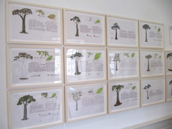 "Abel Rodriquez, Selected drawings from the series ""Annual Cycle of the Flooded Rainforest"""