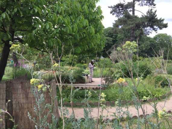 Man standing reading in the Potager at Jardin des Plantes, Paris, May 2017