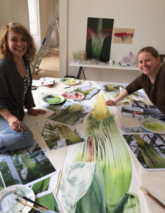 Botanical artists Işık Güner and Sharon Tingey working on a triptych of the Royal Botanic Garden's Amorphophallus titanum when it flowered in 2015. Photo: Serge Jakobson