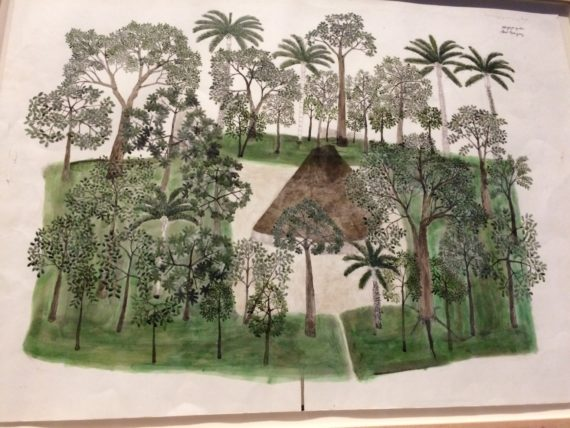Abel Rodriguez, Annual Cycle of the Flooded Rainforest