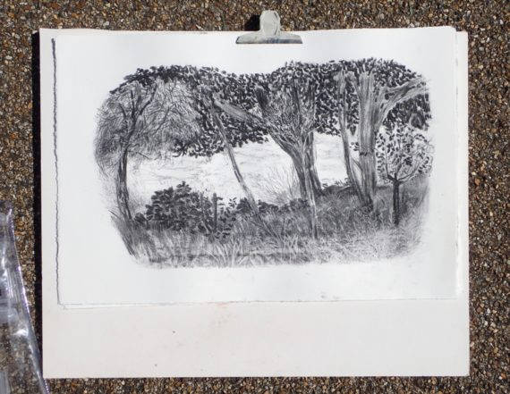 Lower Leas Coastal Park, charcoal drawing
