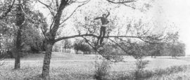 Bas Jan Ader - fall (organic)