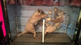 Walter Potter's Fighting Suqirrels at the Morbid Anatomy Museum