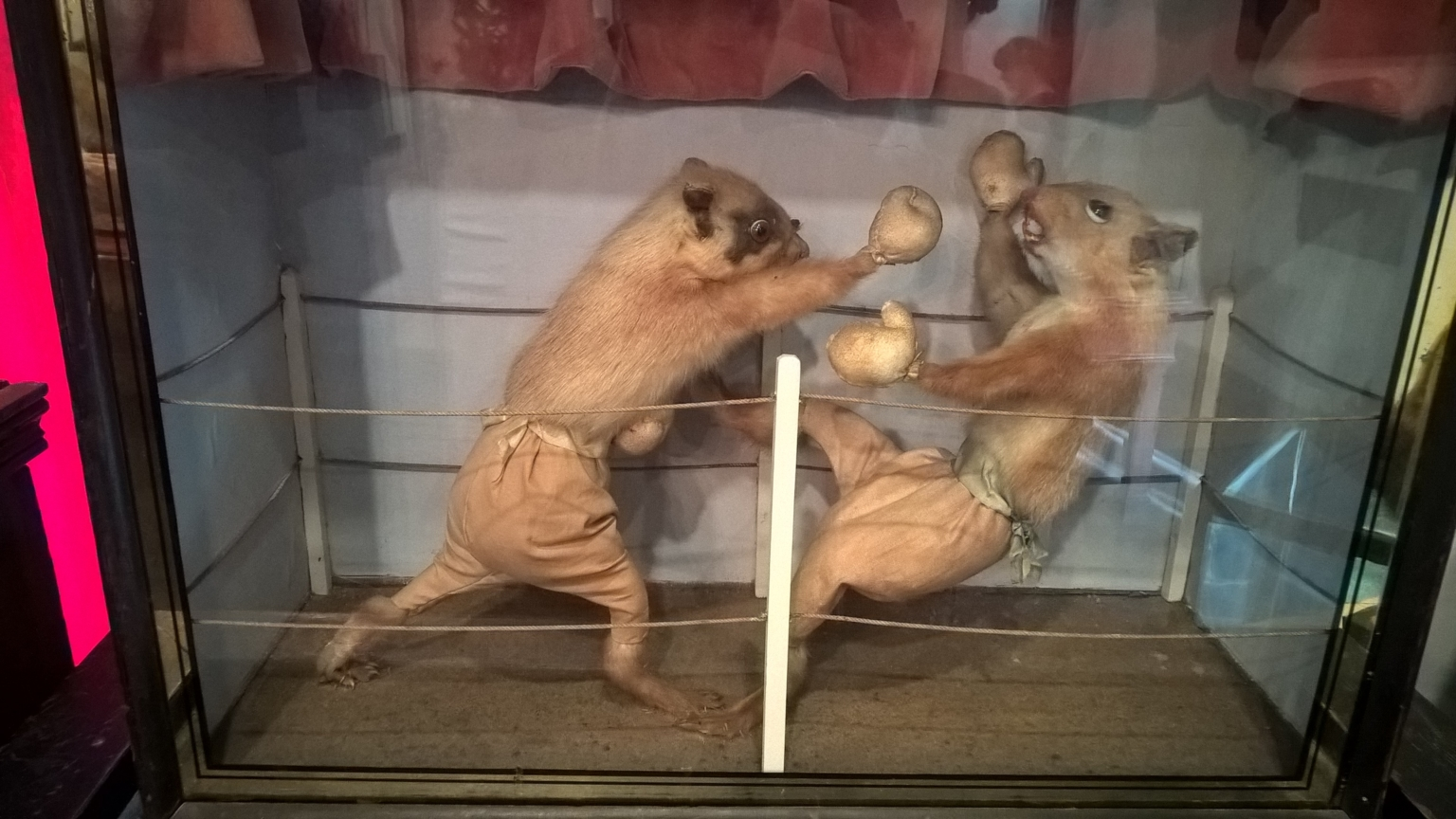 Walter Potter's Fighting Suqirrels at the Morbid Anatomy Museum