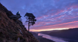 Midwinter morning at the Glencoyne Pine