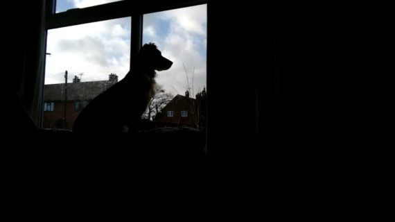silohette of small dog at window