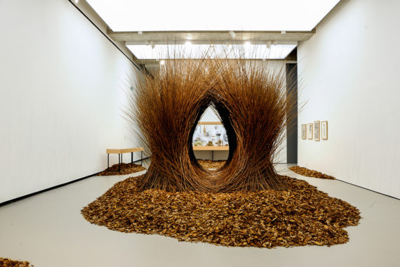 Andy Holden and Peter Holden, 'Natural Selection', installation view, Towner Art Gallery. Courtesy: Towner Art Gallery
