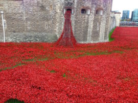 Blood Swept Lands and Seas of Red, Tower of London. Photo: Stephen Palmer