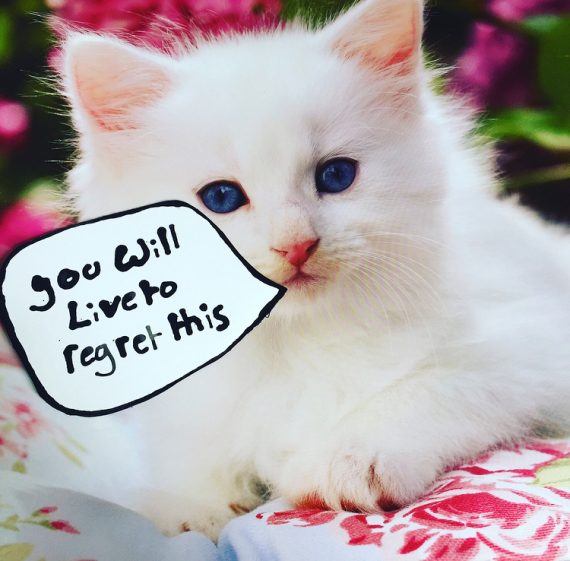 a white kitten sits on a floral rug. Text in a hand drawn speech bubble reads 'you will live to regret this'