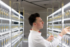 Ross Fleming, 'Flemings Lemons', 2020, installation view. Photo; Richard Taylor