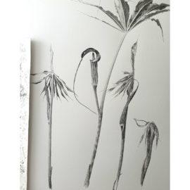 Arisaema cilliatum pen and ink, Japanese ink paste on Lambeth cartridge