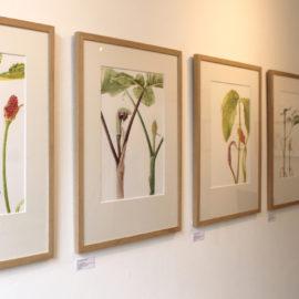 Ariseama watercolour paintings at the Open Eye Gallery Edinburgh