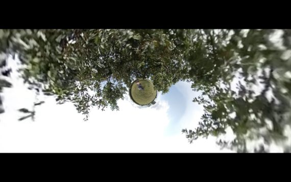 a frame grab from a tiny planet 360 video with a tree around the edge of the frame