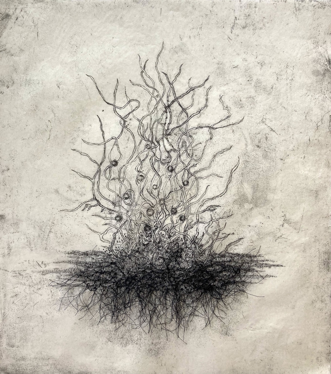 Etching on paper of a plant